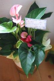 お花15.jpg