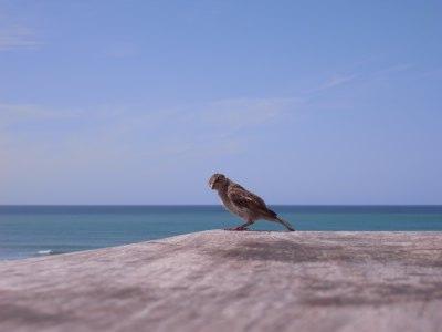 鳥バスク.jpg
