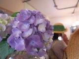 blooming1.jpg