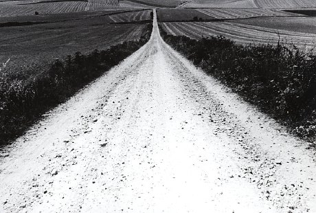 camino0.jpg