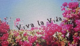 vivalavida.jpg